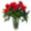 Valentine Famoso 1 Dozen Roses