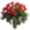 Valentine Famoso 3 Dozen Roses
