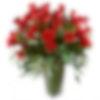 Valentine Famoso 4 Dozen Roses