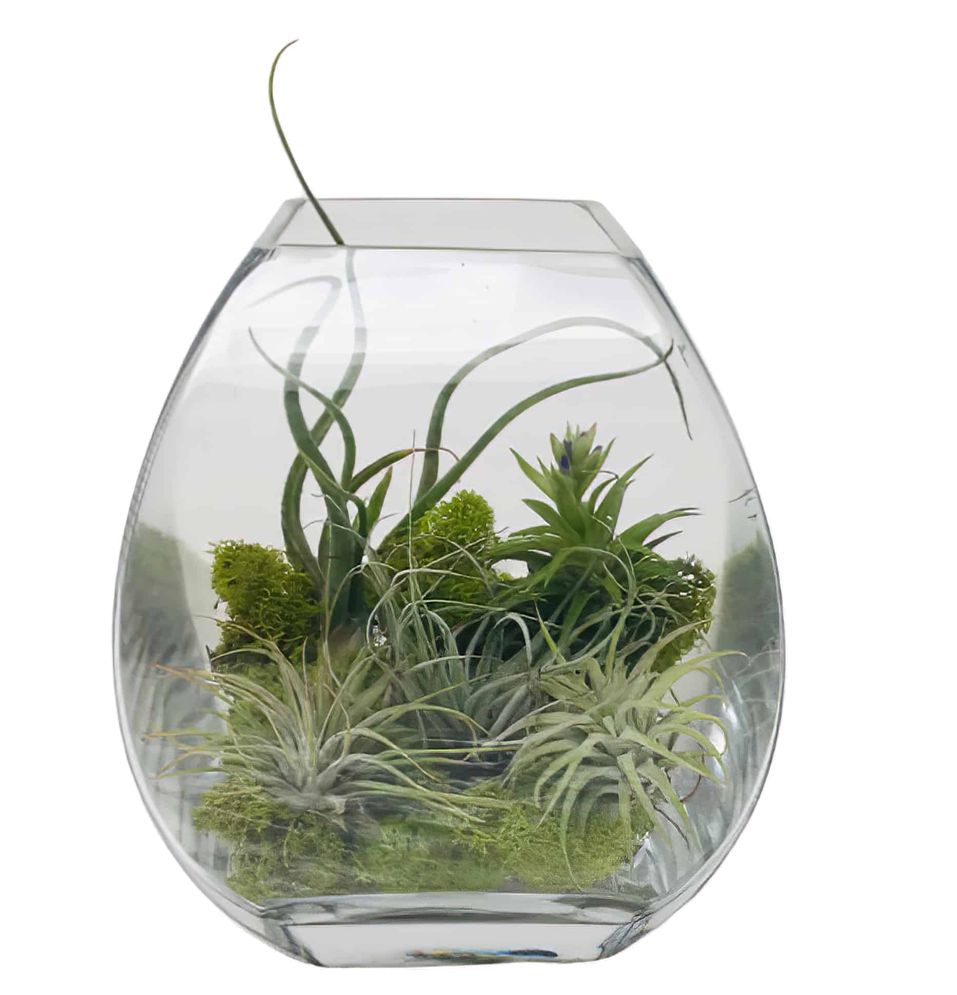 Air Plant Terrarium | San Francisco Florist Since 1871 Free Bay Area and San Francisco Flower Delivery