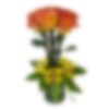 Captured Rose Flower Arrangement