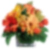 Daisy Splash Flower Arrangement