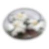 Floating Gardenia Bowl - Flower Arrangement