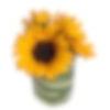 Tre Sunflowers Arrangement
