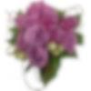 Valentina Wrap - 1 Dozen Roses